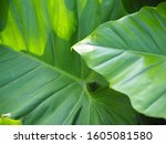 green tree leaf plant natural | Shutterstock . vector #1605081580