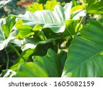 green tree leaf plant natural | Shutterstock . vector #1605082159