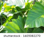 green tree leaf plant natural | Shutterstock . vector #1605082270