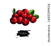 cranberry vector drawing.... | Shutterstock .eps vector #1605299416