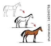 stages of drawing horse sketch... | Shutterstock .eps vector #160545758