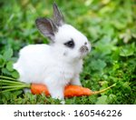Stock photo funny baby white rabbit with a carrot in grass 160546226