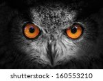 Stock photo eagle owl looking out of the darkness close up black and white 160553210