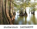Bald Cypress At The Lakes Edge...