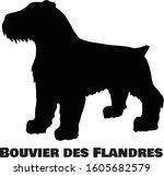 bouvier des flandres dog breed... | Shutterstock .eps vector #1605682579