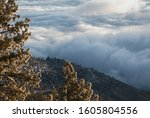 Above the clouds panoramic view of Kingsbury Grade highway, Nevada, through pine trees in winter