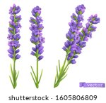 lavender flowers realistic... | Shutterstock .eps vector #1605806809