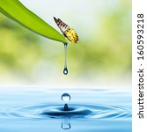 Water Drop From Green Leaf Wit...