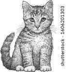 kitten illustration  drawing ... | Shutterstock .eps vector #1606201303