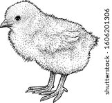 chick illustration  drawing ...   Shutterstock .eps vector #1606201306