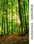 forest trees with sunlight in... | Shutterstock . vector #160623818