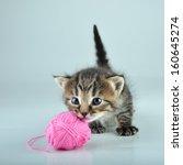 funny cute little kitten... | Shutterstock . vector #160645274