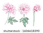 Set The Composition Of Pink...