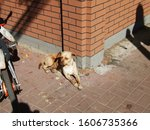Street Strayed Dog Having Rest...