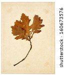 oak yellowish brown dried... | Shutterstock . vector #160673576