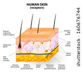 cross section human skin.... | Shutterstock .eps vector #160676744