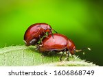 Couple Of Beetles Found In The...