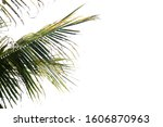 nature tree leaf with... | Shutterstock . vector #1606870963
