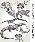 Hand Drawn Lizard Vector Set