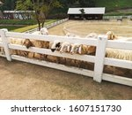 herd of sheep on the farm | Shutterstock . vector #1607151730
