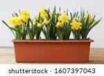 Many Yellow Spring Flowers In A ...