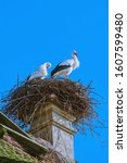 Storks in a nest on a house chimney