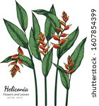 heliconia flower and leaf... | Shutterstock .eps vector #1607854399