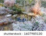 Frozen Garden Pond With Frost...