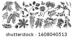 Vector Set Of Spring Trees In...