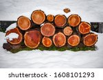 Tree Trunks Cut And Stacked In...