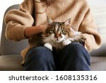 Portrait Of Cute Domestic Cat...