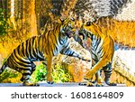 Small photo of Two tigers play and fight. Tigers playing. Tigers fighting