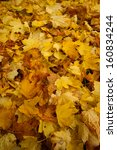 autumn leaves | Shutterstock . vector #160834244