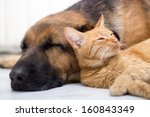 Stock photo cat and dog resting together 160843349