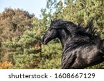Black Frisian Horse In Motion