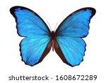 Beautiful Exotic Blue...