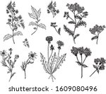 beautiful black and white...   Shutterstock .eps vector #1609080496