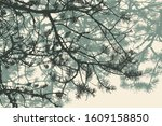 pine tree and branches... | Shutterstock .eps vector #1609158850