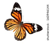 Stock photo common tiger butterfly isolate on white background danaus genutia 160946144