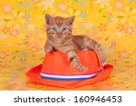 Stock photo ginger kitten on dutch orange hat against a flowery yellow background 160946453