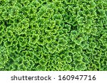 Green Background Of The Ground...