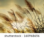 breeze swaying the grass with... | Shutterstock . vector #160968656