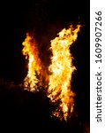 Burning Evergreen Trees Produce ...