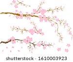 branch of sakura flower vector... | Shutterstock .eps vector #1610003923
