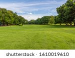 Green Tree And Green Grass In...