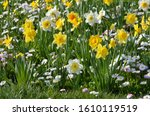 Group Of Delicate White And...
