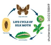 silk moth life cycle... | Shutterstock .eps vector #1610158849