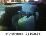 View Of Polar Bears Playing...