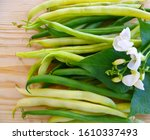 Green And Yellow Bean Pods Of...