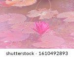fresh bloom pink nymphaea water ... | Shutterstock . vector #1610492893